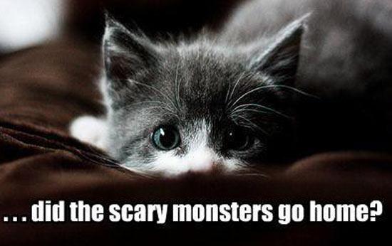 kitten-fright