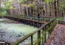 Santee Coastal Reserve boardwalk SC