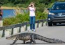 Alligator Street Cross Huntington Beach SC small